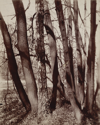 Eugène Atget - Saint-Cloud Evening, 7h00, Late May 1922