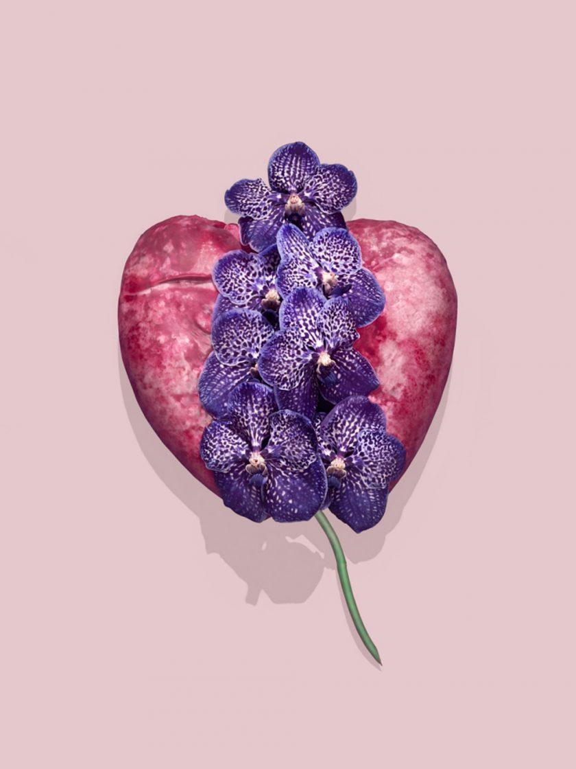 Fleur-Viande-Ulysse-Darcoe-Tafmag-5-768x1024