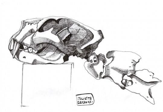 PORTRAIT// Juliette Seydoux dessine et dissèque les corps