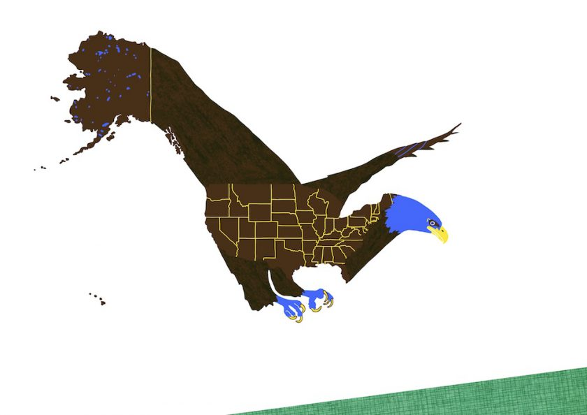 2.AmericanBaldEagle ellis van der does tafmag illustration dessin