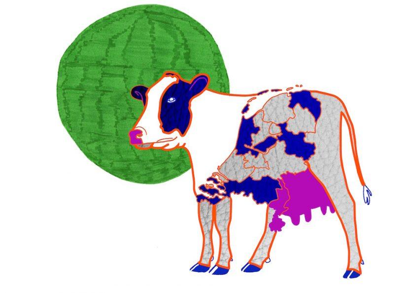 6.DutchCow ellis van der does tafmag illustration dessin