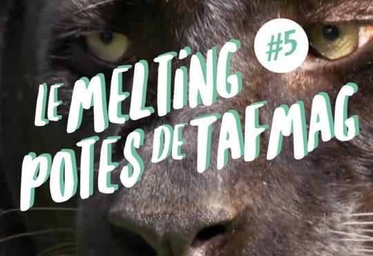 MELTING POTES // Animal Records & Kitchen, la belle panthère